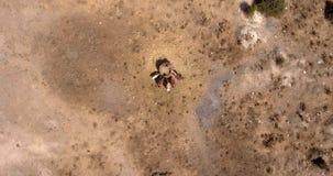 photo aérienne des chevaux mangeant le foin le jour ensoleillé d'été dans un domaine sec Photos libres de droits