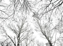 Photo of abstract trees background Stock Image