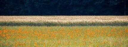 Photo abstraite d'un champ de blé avec le pavot dans le premier plan et une forêt foncée à l'arrière-plan Photo stock