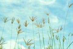 Photo abstraite de vintage d'herbe et de mauvaise herbe de fleur dans le domaine avec le ciel bleu et le nuage à l'arrière-plan Image stock