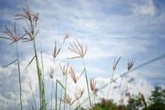 Photo abstraite de vintage d'herbe et de mauvaise herbe de fleur dans le domaine avec le ciel bleu et le nuage à l'arrière-plan Images stock