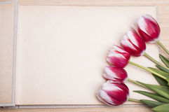 Photo album and tulips stock images