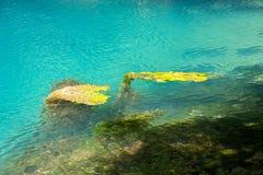 Photo of algae under turquoise water Royalty Free Stock Photos