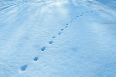 Photo of animal footprints in snow Stock Photos