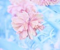 Photo artistique des fleurs énormes de pavot Photographie stock