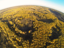 Photo of an autumn forest with a bird's eye view Stock Photo