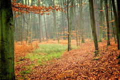 Photo of autumn forest Stock Photos