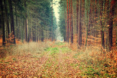 Photo of autumn forest Royalty Free Stock Photography