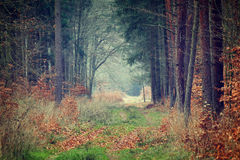 Photo of autumn forest Stock Image