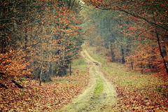 Photo of autumn forest Stock Photography