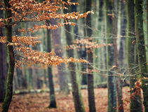 Photo of autumn forest Royalty Free Stock Photo