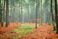 Photo of autumn forest Royalty Free Stock Photos