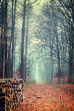 Photo of autumn forest Royalty Free Stock Images