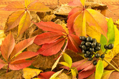 The Photo Autumn leaves and black berries lie on wood background Stock Photos