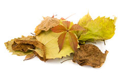 The Photo Autumn leaves lie isolated Royalty Free Stock Photography