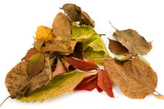 The Photo Autumn leaves lie on white background. Royalty Free Stock Images