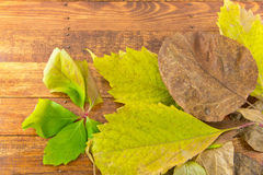 Photo Autumn leaves lie on wooden background. Stock Image