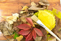 The Photo Autumn leaves lie on wooden background. Stock Images