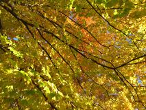Mid November Autumn Leaves stock images