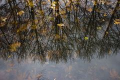 Autumn trees reflection on water. Photo of autumn leaves in a reservoir with the trees reflection on water. Image is taken in National Botanical Park, Baku Stock Photography