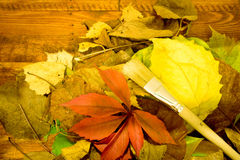 The Photo Autumn leaves on wooden background. Stock Image