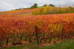Photo of autumnal vineyards, Burgundy Royalty Free Stock Photos
