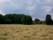 Photo avec le fond ensoleillé calme de paysage d'été avec des champs d'herbe coupée, avec des arbres et des buissons, végétation  Photos stock