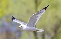 photo avec un vol de mouette dans le ciel Image libre de droits