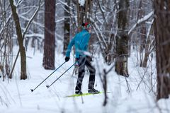 Photo from back of male skier in forest in winter. Afternoon Royalty Free Stock Images