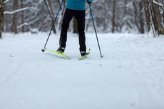 Photo from back of skier on background of trees. In winter afternoon Royalty Free Stock Images