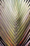 Photo background palm leaf Stock Image