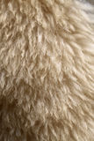 Photo background sheep fur Stock Images