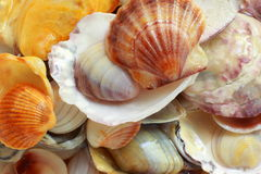 Photo background with shells Royalty Free Stock Photo