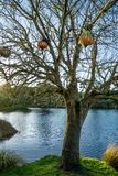 Bare tree in front of a blue lake royalty free stock images