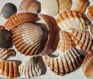 Summertime : Collection of shell debris stock photo