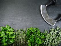 Herbs and cutter on slate background Stock Photos