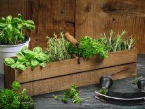Herbs in old wood box Stock Image