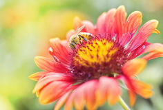 Photo of a beautiful bee and flowers a sunny day. Stock Image