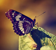 Photo of beautiful butterfly on wild flower toned with a retro v Royalty Free Stock Images