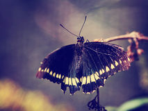 Photo of beautiful butterfly on wild flower toned with a retro Royalty Free Stock Image