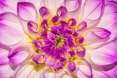 Photo of close-up abstract flower background, one flower texture Royalty Free Stock Photography