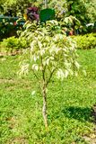 Photo of beautiful croton plant stock photography
