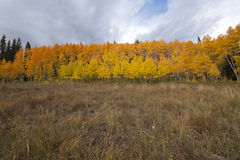 Photo of a beautiful fall season in Colorado Stock Photography