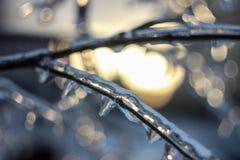 Frozen Stock Photos
