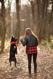 Photo of the beautiful girl with her black dog in the wood. Back view stock photos