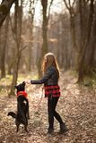 Photo of the beautiful girl with her black dog in the wood. Back view royalty free stock image