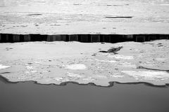Photo of beautiful ice and water. On the river in winter Royalty Free Stock Photo