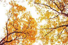 Photo of orange autumn forest with leaves Royalty Free Stock Photos