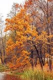 Photo of orange autumn forest with leaves near the lake Royalty Free Stock Photos