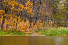 Photo of orange autumn forest with leaves near the lake Royalty Free Stock Image